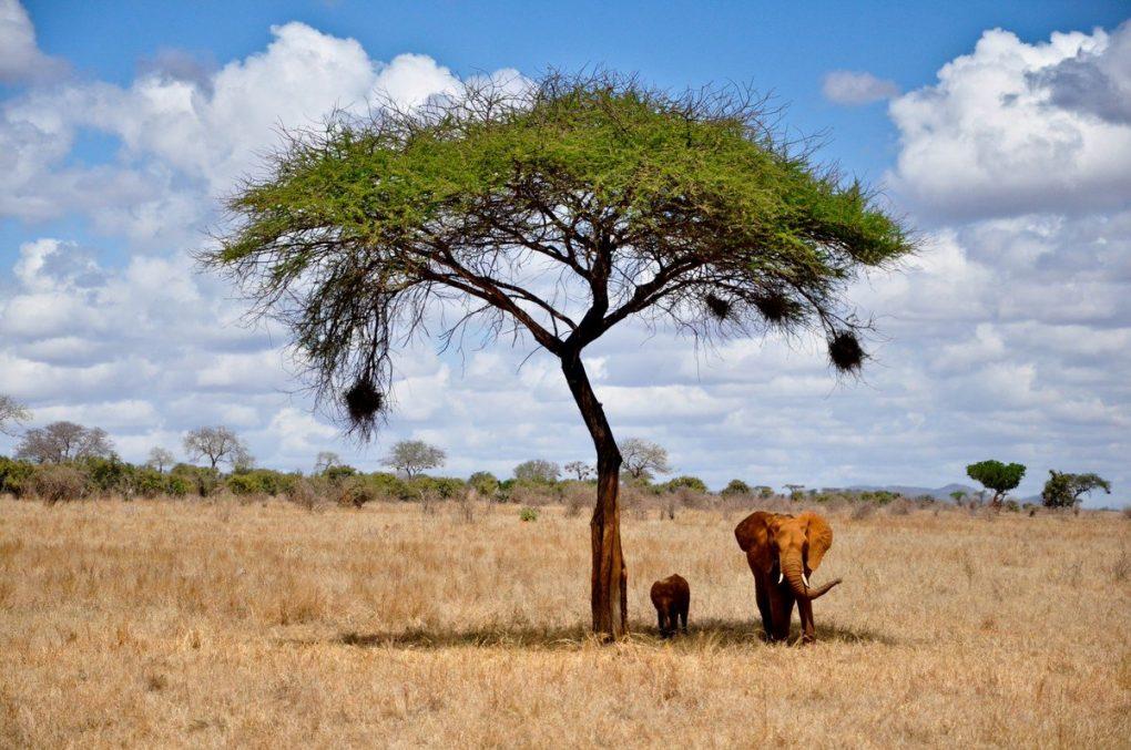 Интересно знать : Чили и Кения: разные страны с удивительной природой